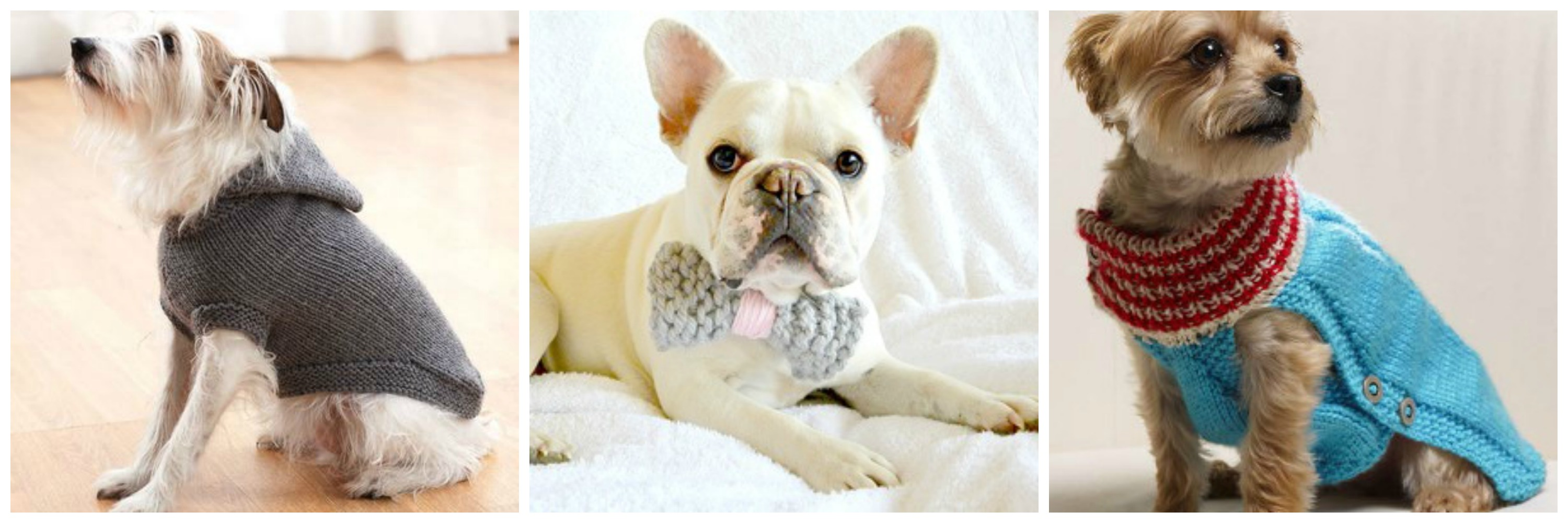 Learn How to Knit a Dog Sweater & BONUS GIVEAWAY - Stitch and Unwind