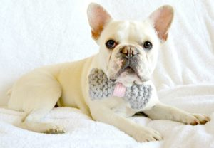 Knit Bow Tie Dog Collar